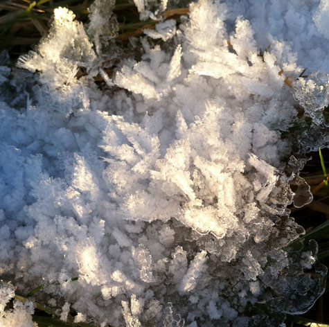 ice crystal formation on grass