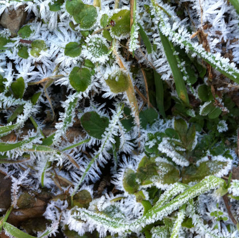 ice crystal formation on leaves, inspiration for jewellery